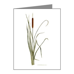 Cattails Note Cards