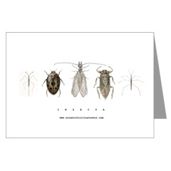 Insect Note Cards