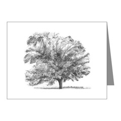 Pecan Tree Note Cards
