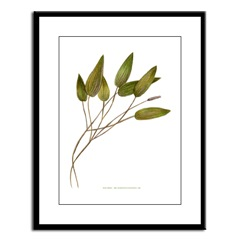 Pond Weed Framed Print