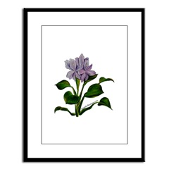 Water Hyacinth Framed Print