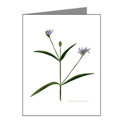 Water Willow Note Cards