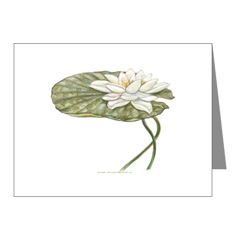 White Water Lily Note Cards
