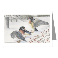 Wood Ducks in Snow Greeting Cards